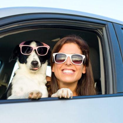 Confira as nossas dicas para viajar com animais