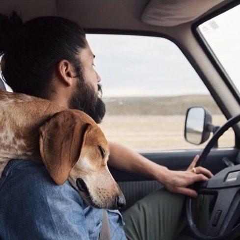 evcil hayvanla yolculuk