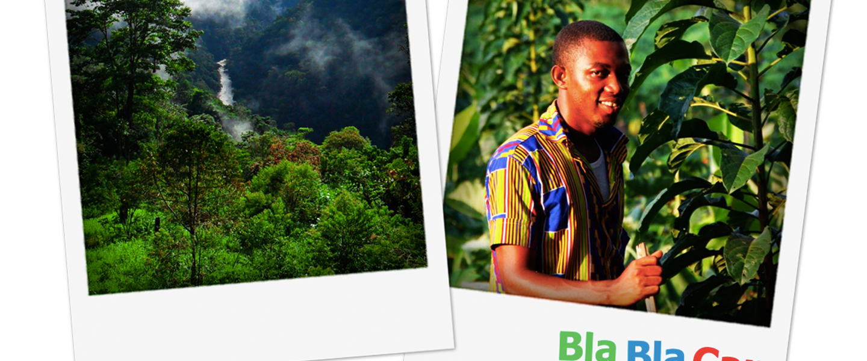 сохранение лесов