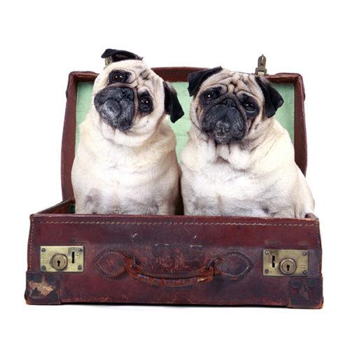 Los viajes en auto compartido también se valen con tu mascota