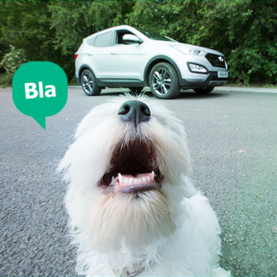 dog_blablacar