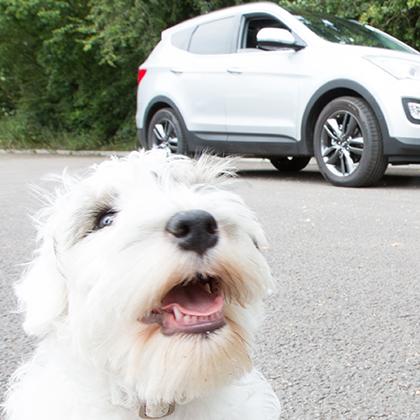 Makkelijk huisdieren vervoeren met de auto via BlaBlaCar