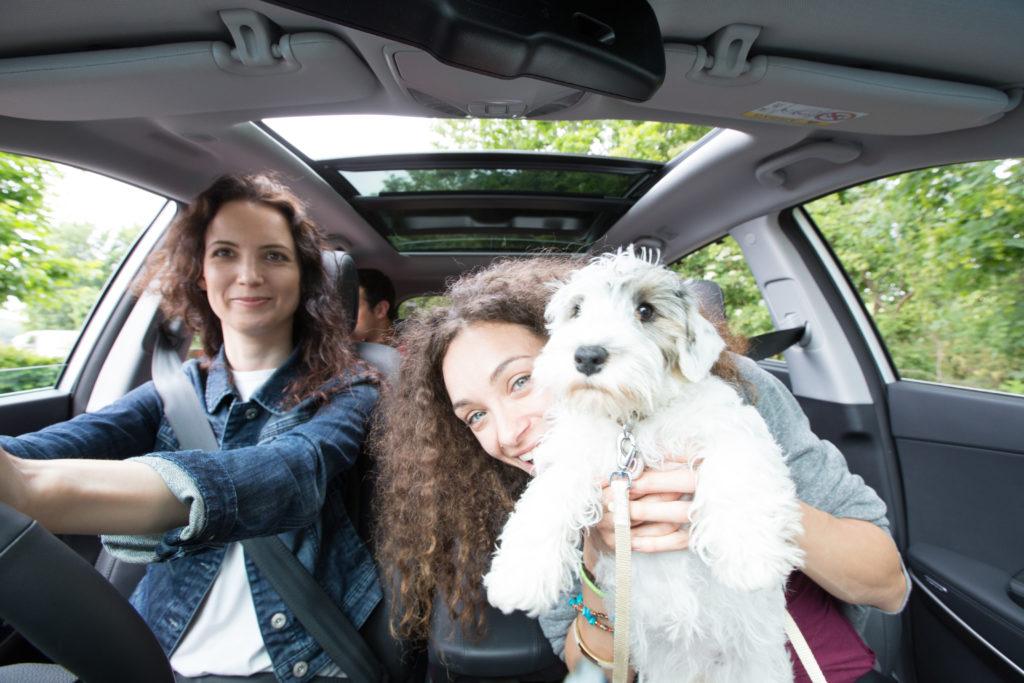 dijeljenje prijevoza sa životinjama