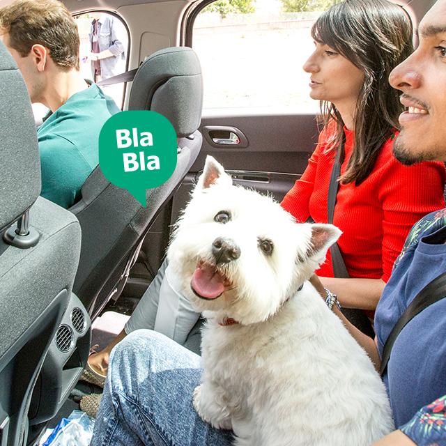 As melhores dicas para viajar com animais