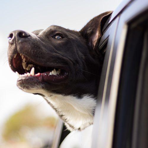 Las mejores historias viajando con mascotas